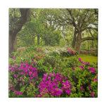 Savannah Spring Tiles