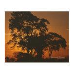 Savannah Sunset Wood Print