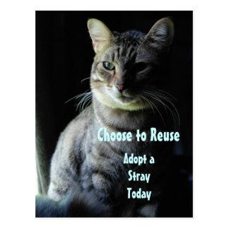 Save A Life! Adopt A Shelter Pet! Postcard