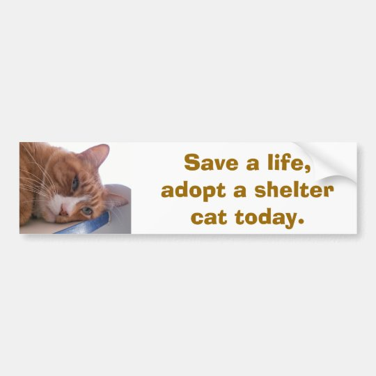Save a life bumper sticker