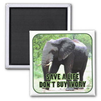 Save a Life, Don't Buy Ivory Magnet