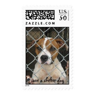 save a shelter dog stamp