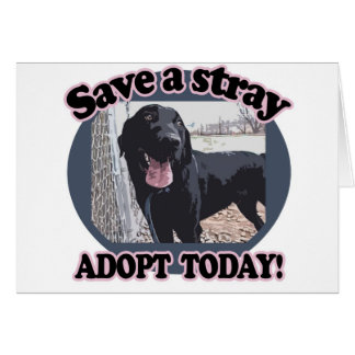 Save a Stray, Adopt Today Card
