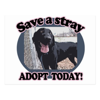 Save a Stray, Adopt Today Postcard