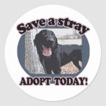Save a Stray, Adopt Today Sticker