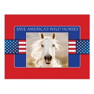 Save America's Wild Horses Postcards