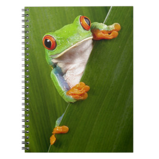 Save eyed tree frog Costa Rica rain forest Notebook