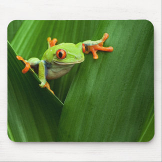 Save eyed tree frog mouse pads