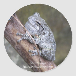 Save Gray Treefrogs Classic Round Sticker