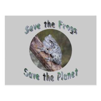 Save Gray Treefrogs Postcard