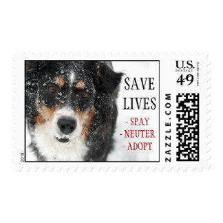 SAVE LIVES, - SPAY- NEUTER- ADOPT- rescue Postage Stamp