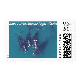 Save North Atlantic Right Whales by RoseWrites Postage