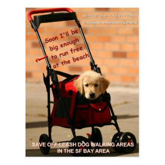 Save Off-Leash Dog Walking Senator Boxer! Postcard