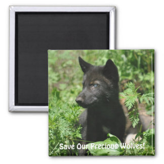 SAVE OUR GREY WOLVES Wildlife Black Wolf Pup Magnet