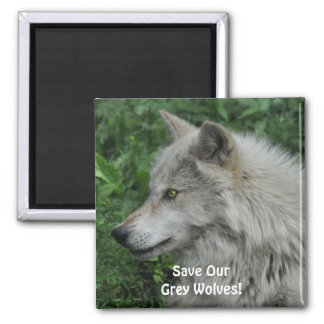 SAVE OUR GREY WOLVES Wildlife Photo Magnet