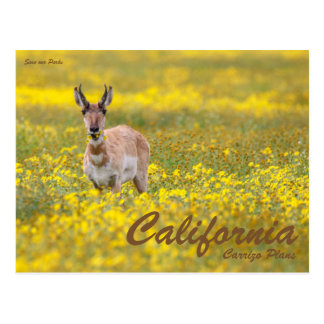 Save our Parks Postcard