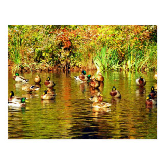 Save Our Planet Migratory Waterfowl post card