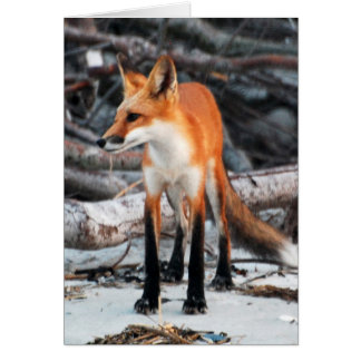 Save Our Planet series Red Fox note/greeting card