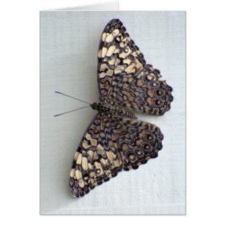 Save Our Planet - Spectacular Butterfly Notecard