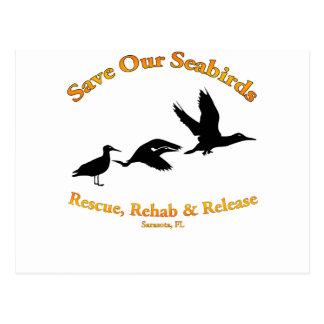 Save Our Sea Birds of Sarasota Florida Postcard