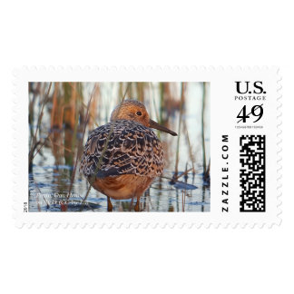 Save Our Shorebirds Stamp by RoseWrites