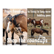 Save Our Wild Horses Campaign Postcard