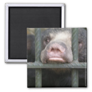 SAVE SLOTH BEARS 2 INCH SQUARE MAGNET