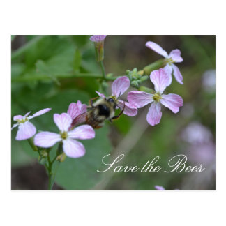Save the Bees....Radish Flowers Postcard