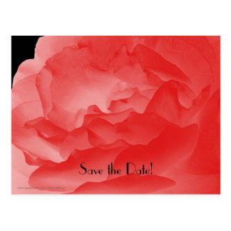 Save the Date 60th Birthday Party Coral Pink Rose Postcard