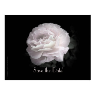 Save the Date 95th Birthday Party Pale Pink Rose Postcard