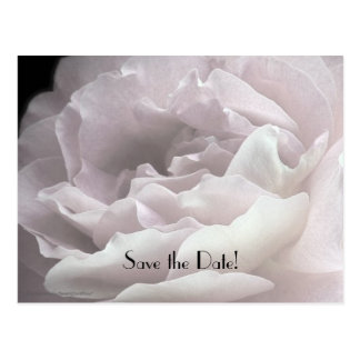 Save the Date 95th Birthday Party Petals Postcard