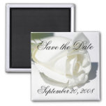 Save the Date Announcement White Rose Magnet Magnets