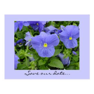 Save the Date Blue/Purple pansy Postcard
