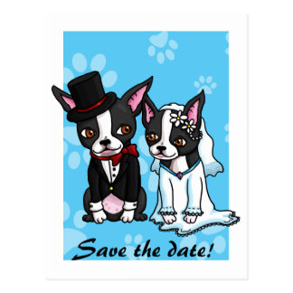 Save the date Boston Terriers Postcard