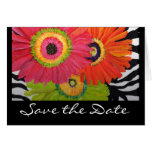 Save the Date Card with 3 Bright Gerbera Daisies