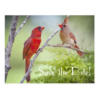 Save the Date Cardinal Love Birds Postcard