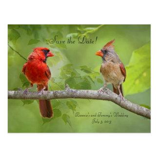 Save the Date! Cardinal Pair Post Card