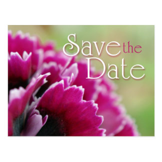 Save the Date fuchsia flower photography postcard