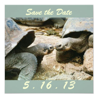 Save the Date Galapagos Tortoise Card