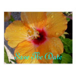 Save The Date Hibiscus Postcard