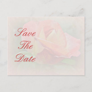 Save the Date - Peachy Rose Blossom Announcement Postcard