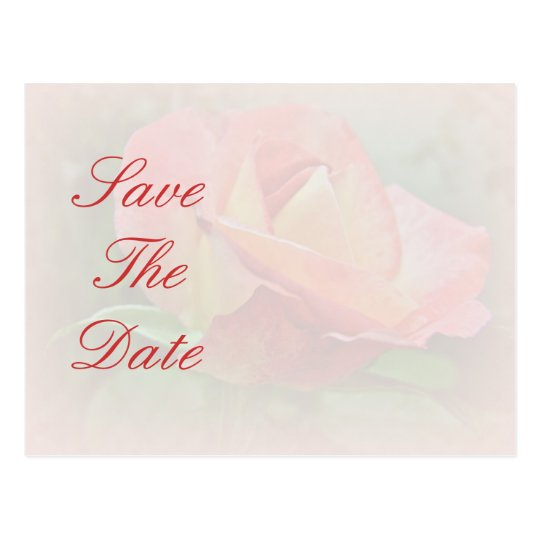 Save the Date - Peachy Rose Blossom Postcard