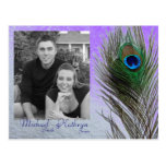 Save the Date - Peacock (Purple) Post Cards