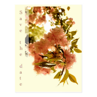 Save the date - pink cherry blossom postcard