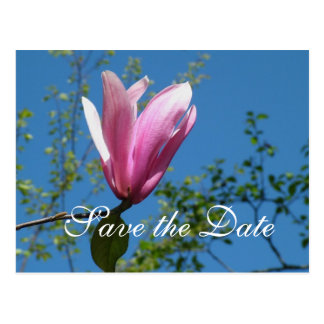 Save the date, pink magnolia flower postcard