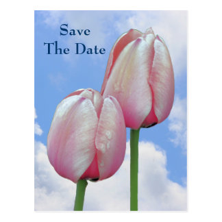Save The Date Pink Tulips Blue Sky Flower Postcard