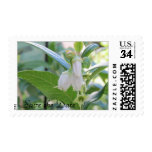 """""""Save the Date""""  Postcard Stamps (29 cents)"""