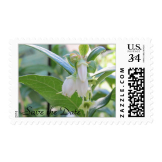 Save the Date Postcard Stamps 29 cents
