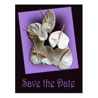 Save the Date postcard - White Anthuriums