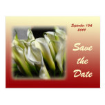 Save the Date postcard - White Calla Lilies